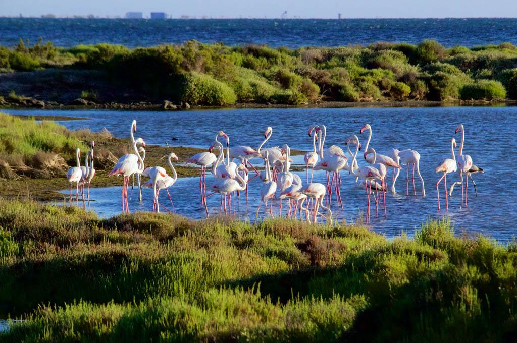 Fauna Ebro