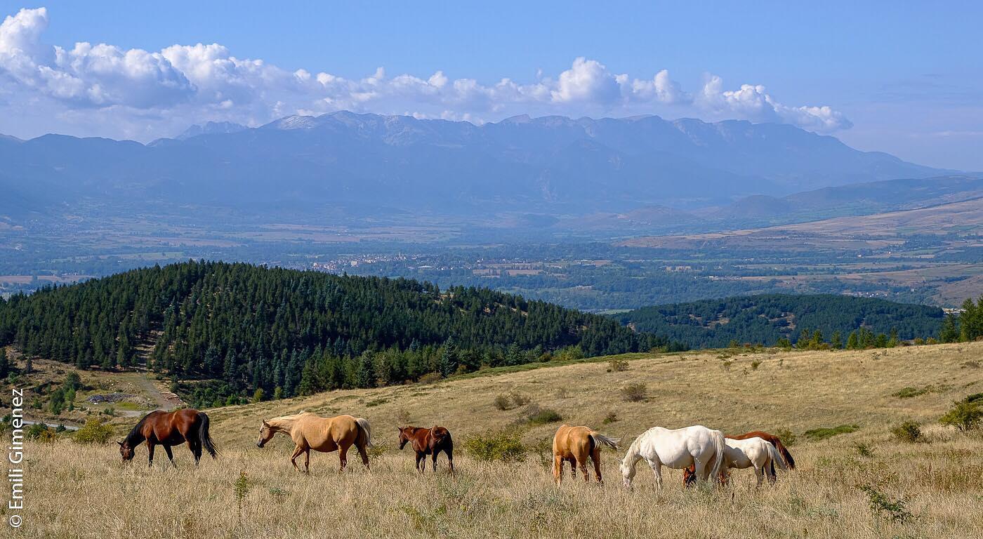 Cavalls a Llívia