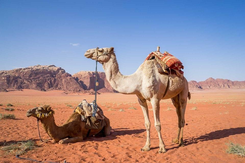 Petra e Deserto Wadi Rum