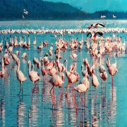 safari lagos masai mara e isla de sands