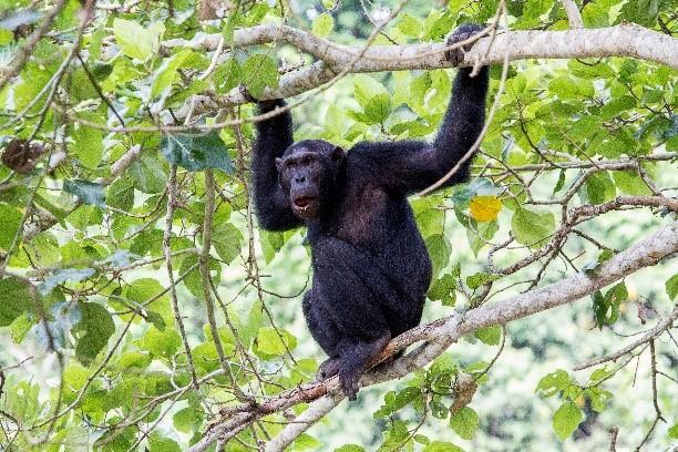 Uganda, la perla de África y los gorilas de montaña