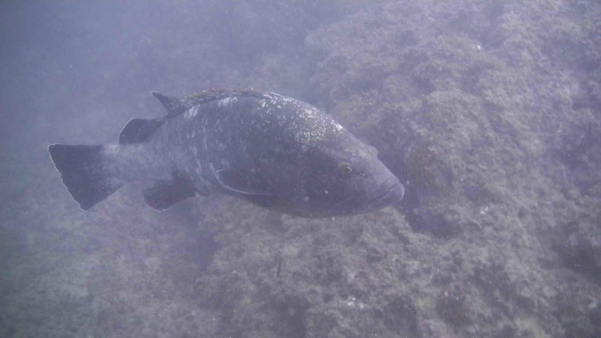 Viaje de buceo fin de semana vida a bordo reserva Islas COLUMBRETES 19-21 julio