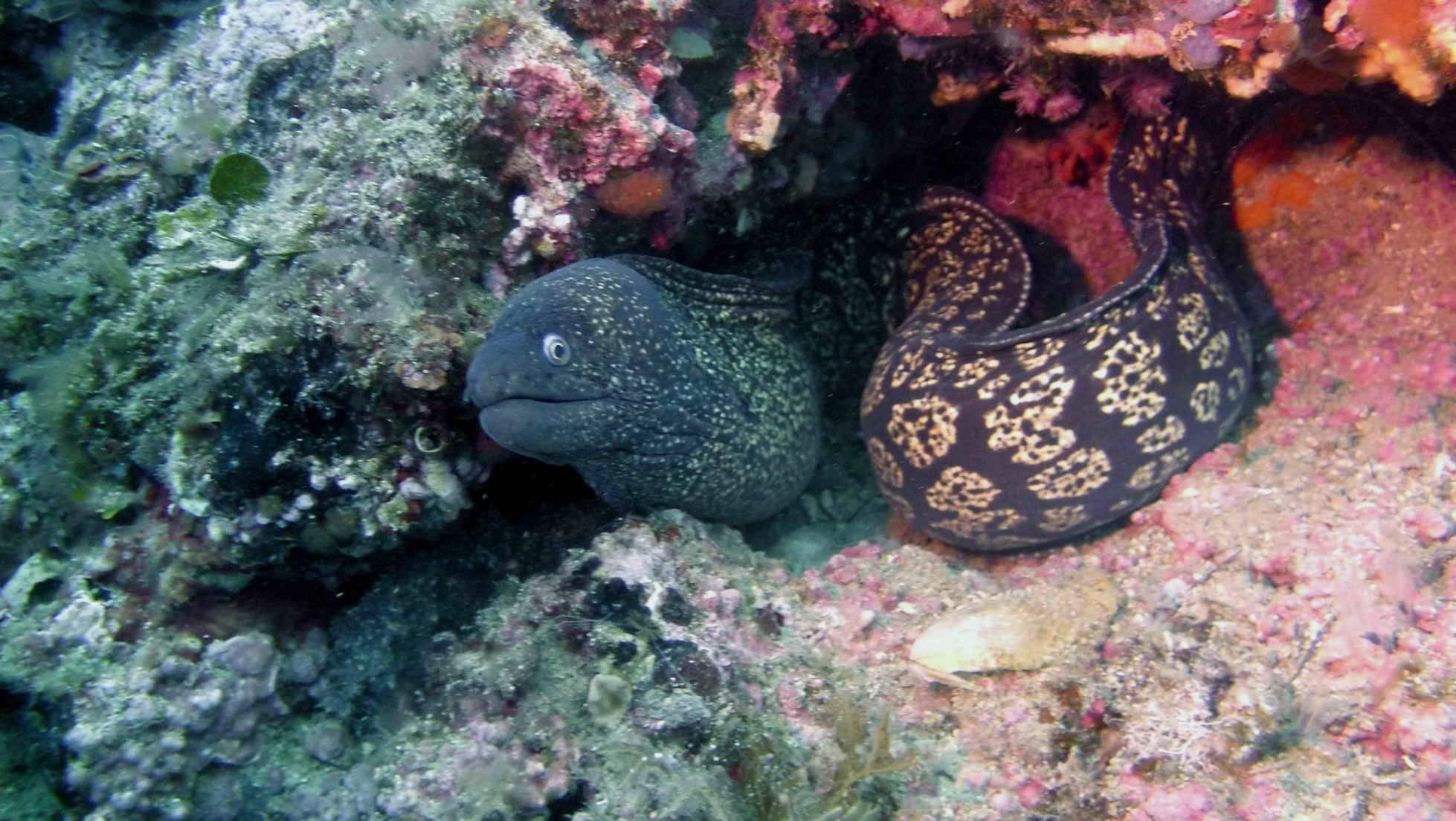 Viaje fin de semana buceo en Cabo de Palos (Murcia) - 6 al 8 de septiembre