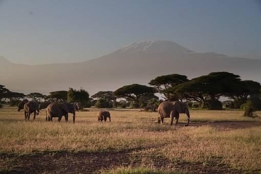 En Amboseli encontraremos elefantes