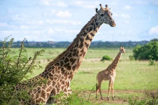 Naturaleza en el safari