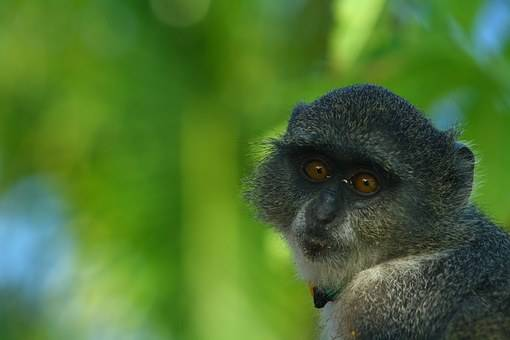 Monos en Zanzíbar