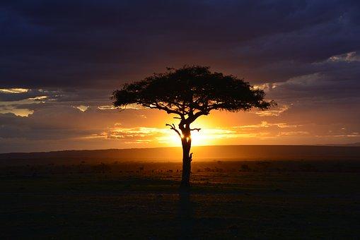 KENYA, SAFARI NDOTO