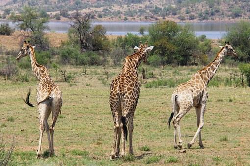 SUDAFRICA IMPRESCINDIBLE