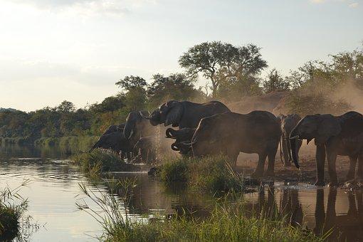 SUDAFRICA ISILWANE