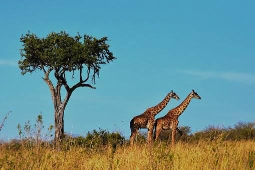 VIDA SALVAJE EN TANZANIA