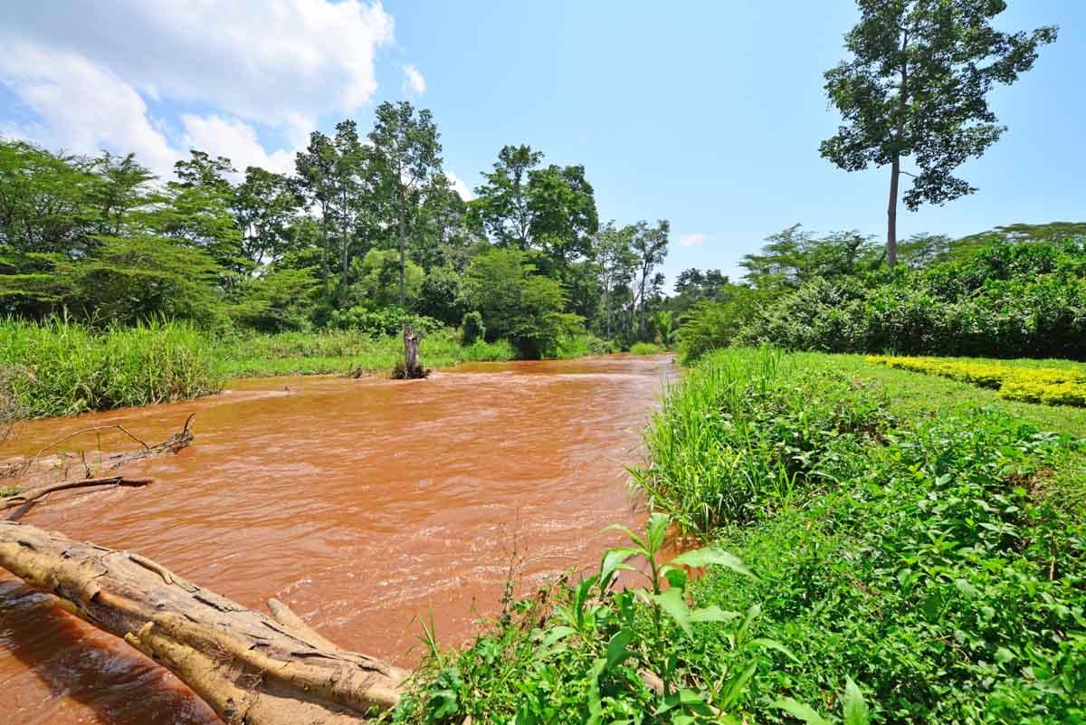 TREKKING GORILAS EN UGANDA